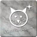 Sticker a mon compagnon chat marbre gris